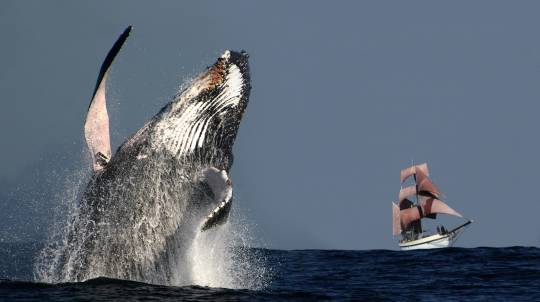 Sydney Whale Watching Cruise on a Tall Ship with Lunch-Adult