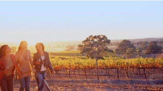 Barossa Valley Hop-On-Off Wine Tour - City Return