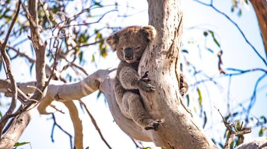 Kangaroo Island Wildlife Discovery Day Tour - Adult
