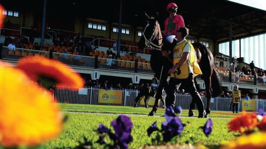 Race Day Package with Transfers and Accomodation - For 2
