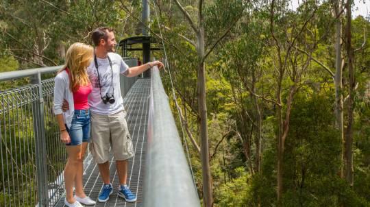 Otway Treetop Forest Adventure Walk