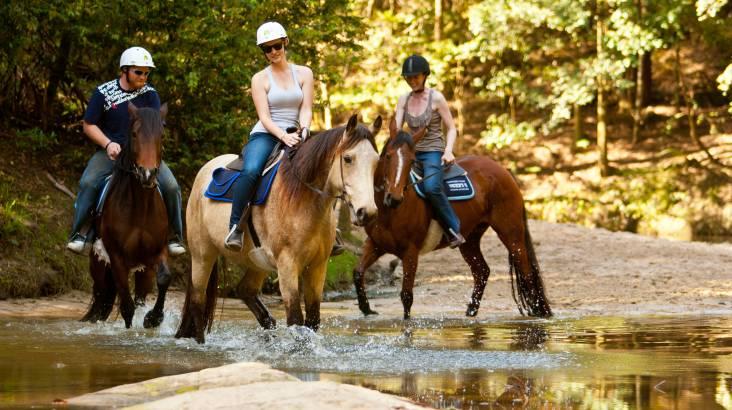 Horse Riding Free Range - 2 Hours