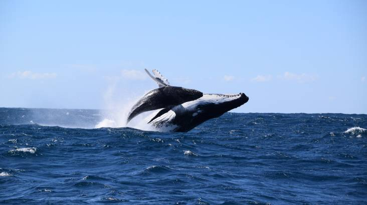 RedBalloon Whale Watching and Speed Boat Thrill - 2 Hours