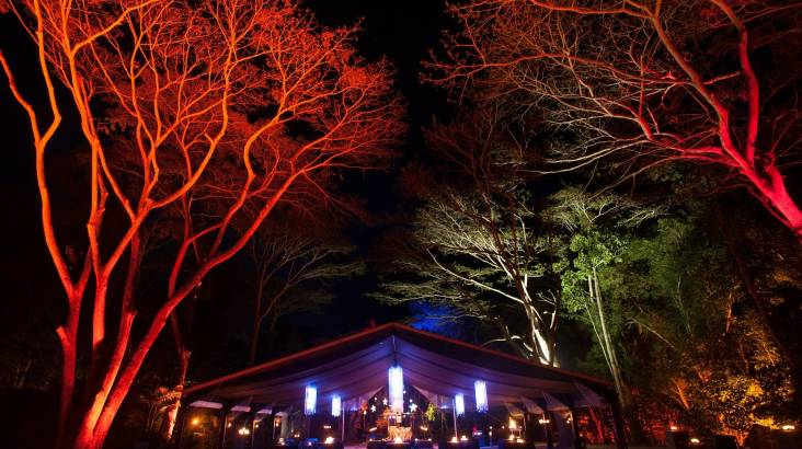 Flames of the Forest Rainforest Dining Experience with Wine