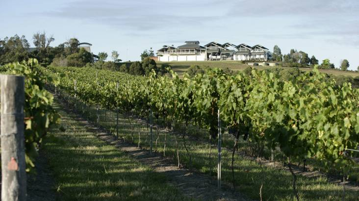 Romantic Joy Flight to Sirromet Winery - For Up To 3