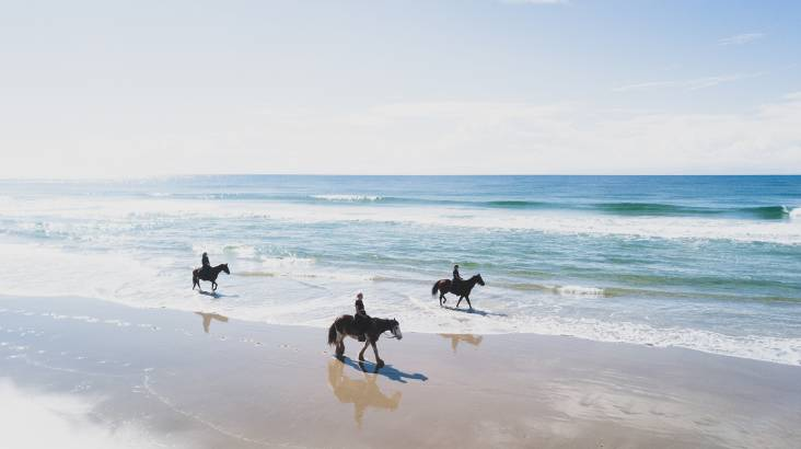 Byron Bay Forest to Beach Horse Trail Ride - 90 Minutes
