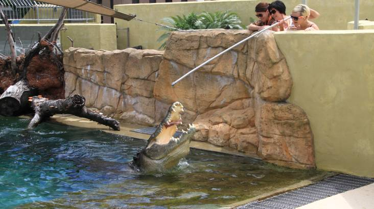 Crocodile Tour and Feed at Crocosaurus Cove