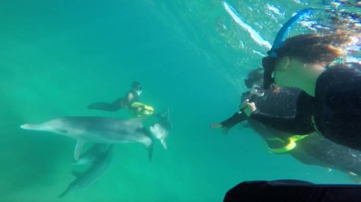Swim with Wild Dolphins - Rockingham