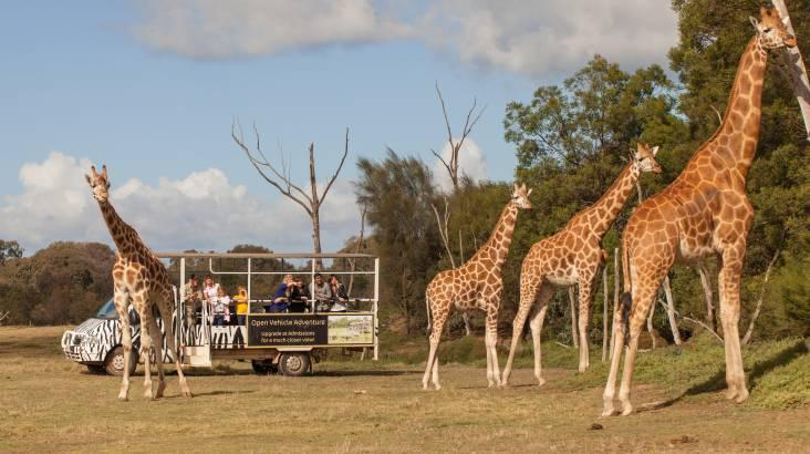 Off Road Animal Safari at Werribee Open Range Zoo - For 2