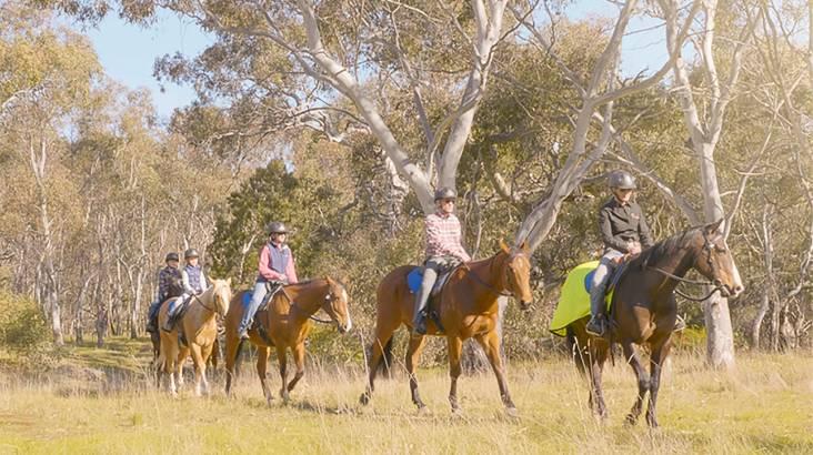 Woodlands Historic Park Horse Riding Tour - 60 Minutes