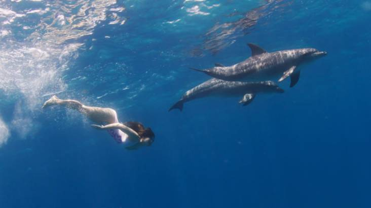 RedBalloon Swim with Wild Dolphins Cruise  - 2 Hours