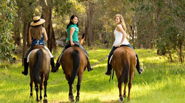 Horse Riding by Twilight - 90 Minutes