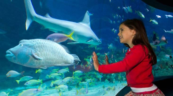 SEA LIFE Melbourne Aquarium Entry