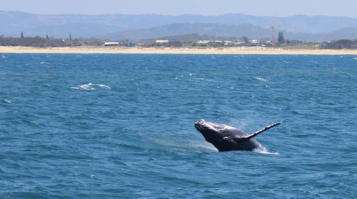 Whale Watching Cruise on the Sunshine Coast - 3 Hours