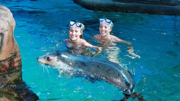 Swim with Seals At SEA LIFE Sunshine Coast