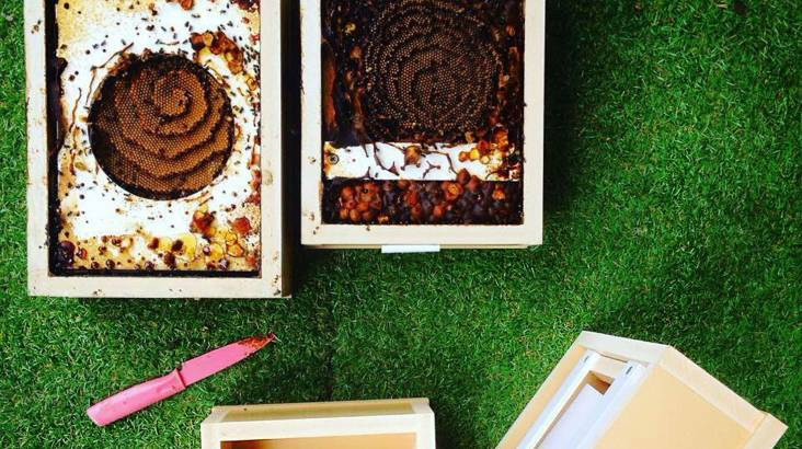 Be Your Own Stingless Beekeeper