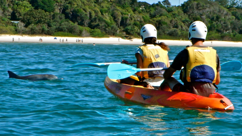 RedBalloon Kayak with Dolphins Guided Tour - 3 Hours