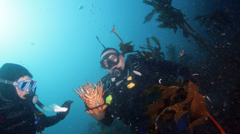 RedBalloon Hunt and Gather Certified Diver Full Day Trip