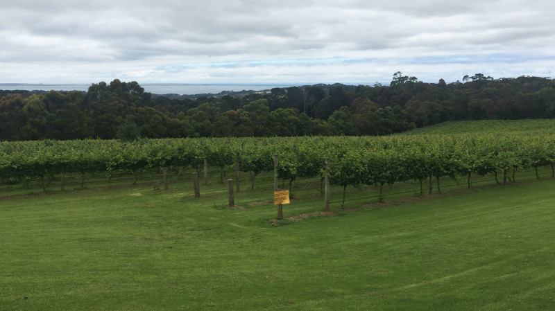 RedBalloon Mornington Peninsula Winery Tour with Lunch and Tastings