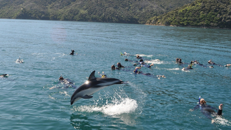 RedBalloon Swimming with Dolphins in Marlborough Sounds
