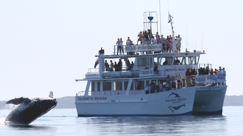 RedBalloon Whale Watch Cruise Jervis Bay - 3 Hours
