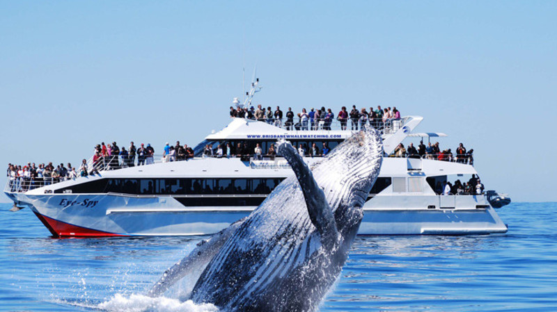 RedBalloon Brisbane Whale Watching Cruise - Full Day
