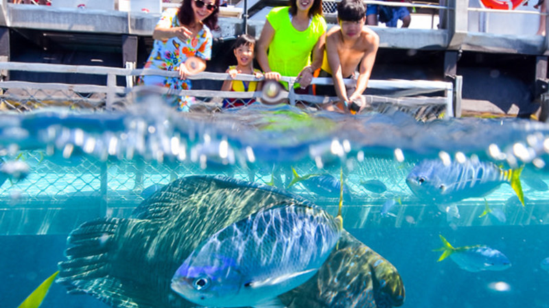 RedBalloon Cruise and Snorkelling at Arlington Reef - Half Day - Child
