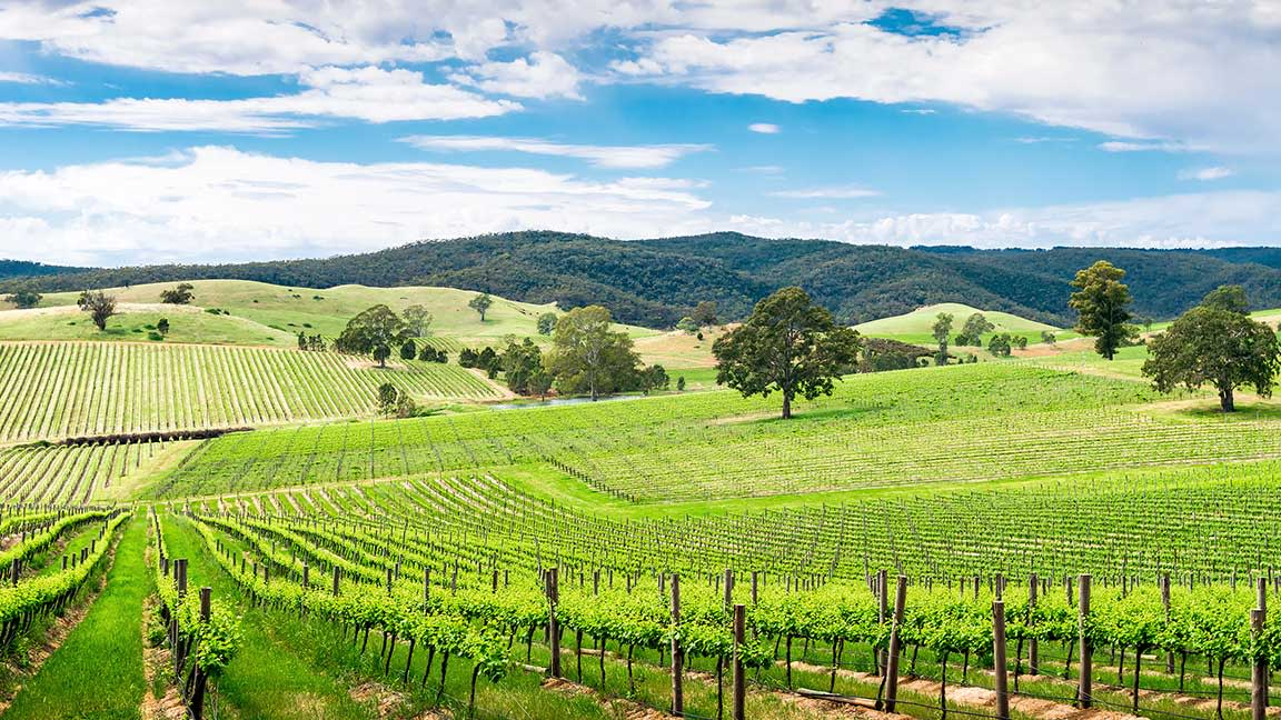 Things to do in the Barossa Valley