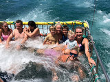 jervis bay boom netting dolphin cruise