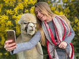 Alpaca Interactive Tour - For up to 4