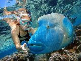 Girl snorkelling with grouper fish at Great Barrier Reef