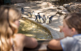 Adelaide Zoo Penguins