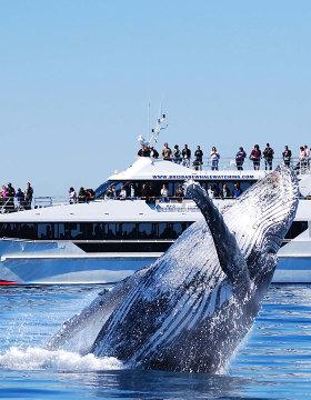 whale watching cruise brisbane