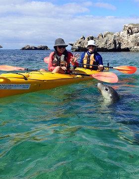 kayak tour of seal and penguin island