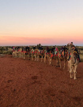 Camel ride in Uluru, NT