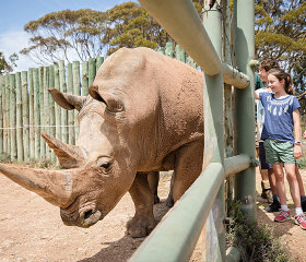 Children patting rhino at Monarto Zoo
