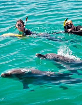 swim with wild dolphins rockingham