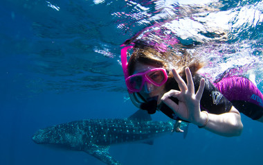 Swim with whale sharks in Exmouth, Western Australia
