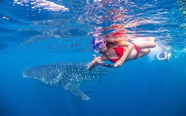 Ningaloo Reef whale shark swim tour
