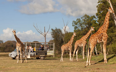 Open vehicle safari at Werribee Zoo