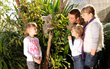 Koala encounter and breakfast at Wild Life Sydney