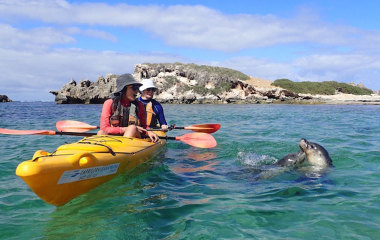 seal kayak tour