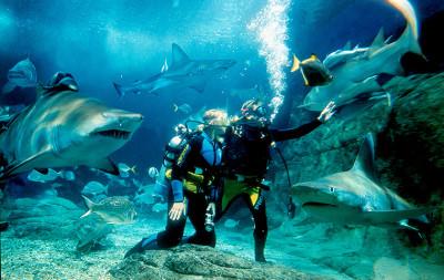Shark diving at SEA LIFE Melbourne Aquarium