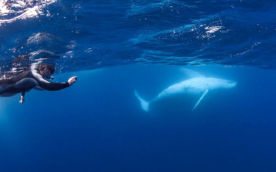 Man swimming next to humpback whale