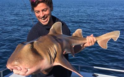 Man holding wobbegong shark