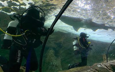 Shark dive SEA LIFE Sydney Aquarium