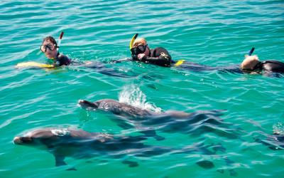 Swim with Wild Dolphins and seals Rockingham