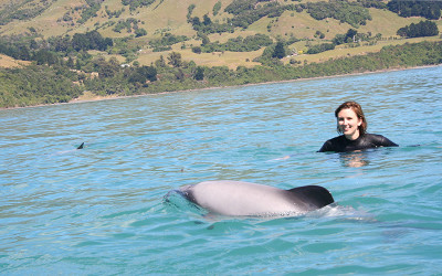 Swim with dolphins in Akaroa Harbour