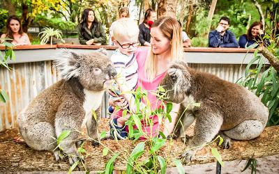 Outback splash entry and koala encounter