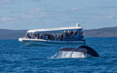 Hervey Bay eco whale search tour